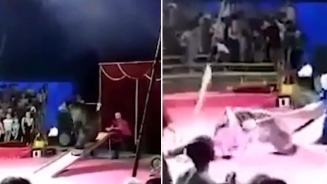 "Skateboarding Russian circus bear says ""nah f**k you"" and attacks its keepers"