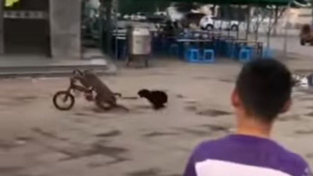 Monkey steals a bike, fends off a dog and rides off like a f*cken boss