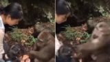 Monkey punches girl in the face at zoo after taunting him