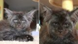 This cat with a human-like face is going viral