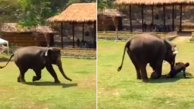 "Elephant rushes to the rescue of his caregiver after he's ""attacked"""