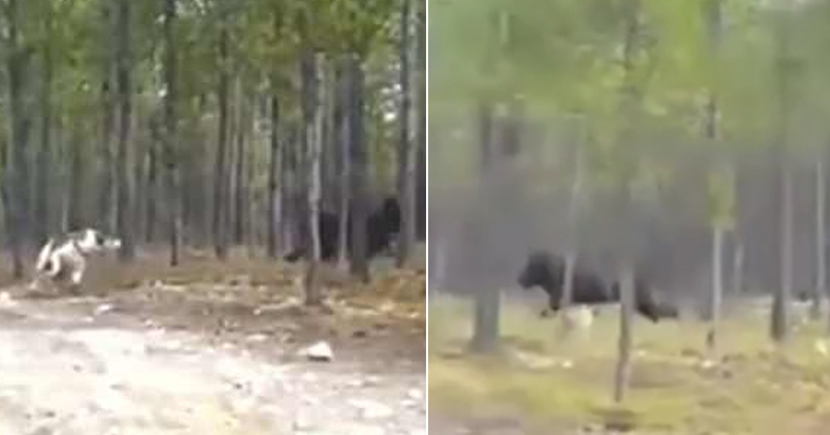 Chilling video captures a mystery f*cken beast chasing dog in the woods