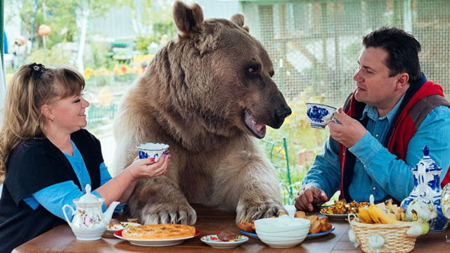 Russian couple have been raising a f*cken orphaned bear for over 20 years