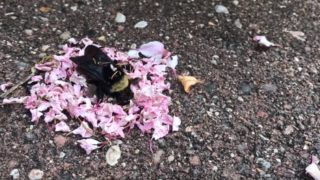 Video footage shows ants performing some sort of ritual on a dead bee