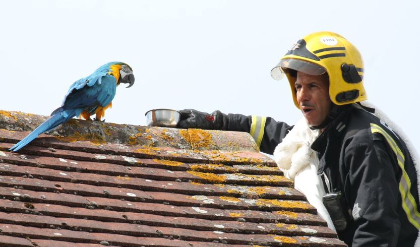 Parrot tells fire fighters to f**k off during rooftop rescue attempt