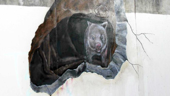 The comedy of errors behind Warrnambool's new wombat mural