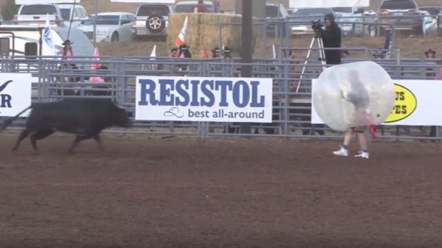 People in zorb balls getting nailed by bulls is f*cken brilliant
