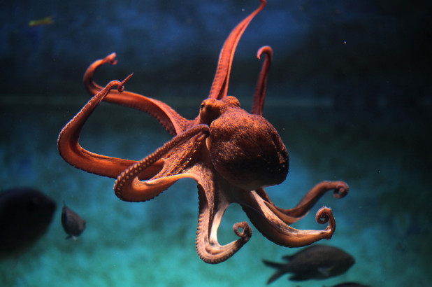 A f**ken octopus. Credit: Sky News