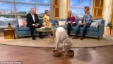 Vegetarian dog embarrasses the f*ck out of his owner on live TV