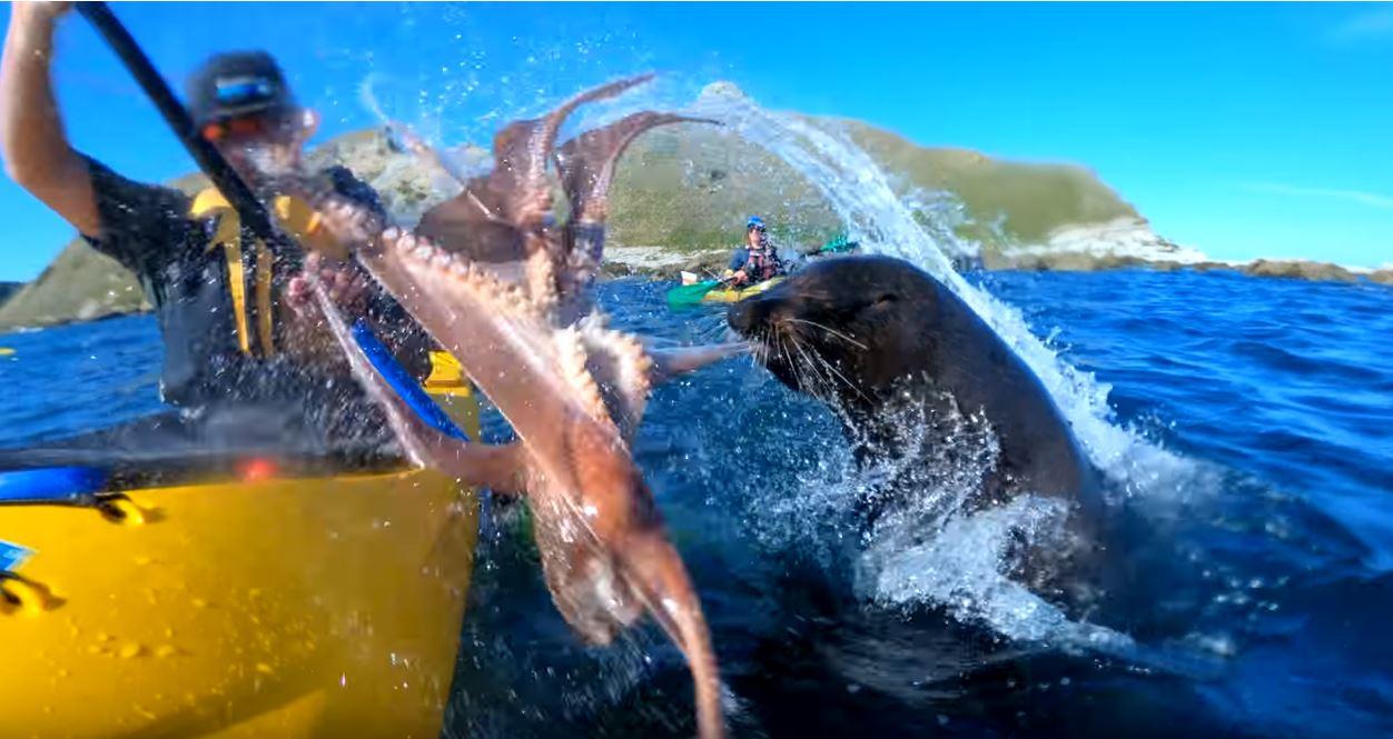 F**ken ninja octopus star! Credit: Taiyo 'T' Masuda