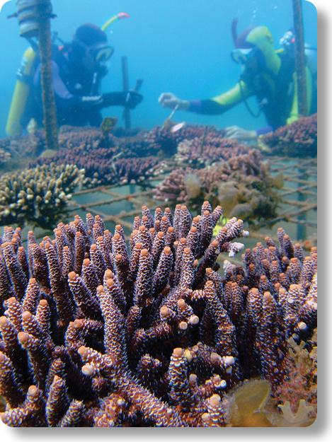 Credit: Reef & Rainforest Research Centre