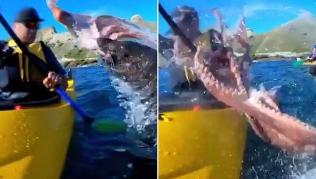 Seal slaps the f*cken shit out of noisy kayaker with an octopus