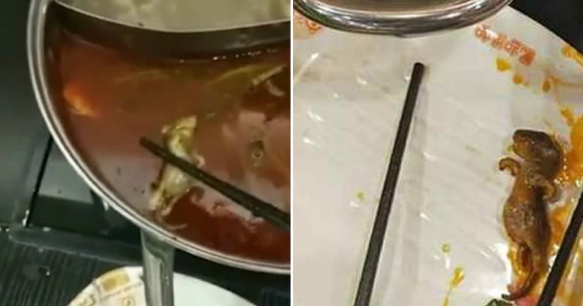 Pregnant woman finds dead rat in soup, restaurant offers to pay for abortion
