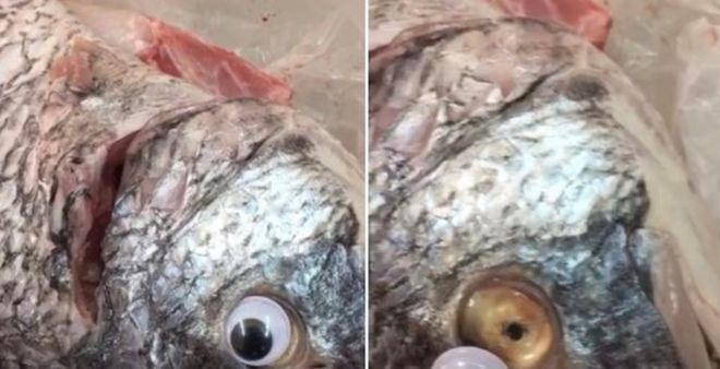 Dodgy store caught selling fish with fake googly eyes stuck on