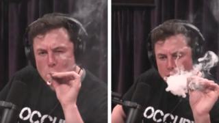 Tesla billionaire Elon Musk gets blazed with Joe Rogan