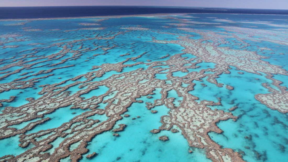 The Great Barrier Reef Is Showing Significant Signs Of
