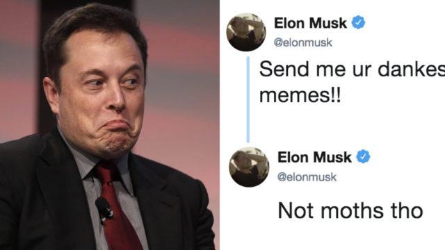 Elon Musk asks Twitter to send him 'Dank Memes', it backfires