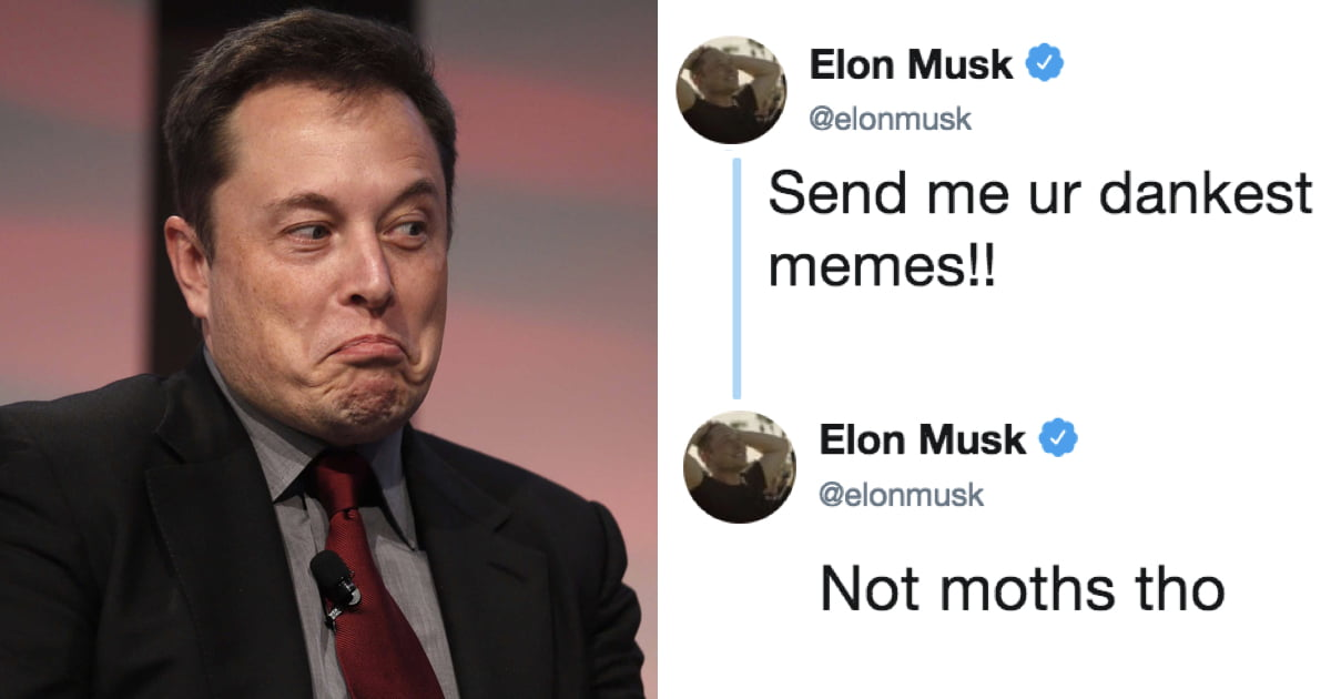 b95350c5654 Elon Musk asks Twitter to send him  Dank Memes