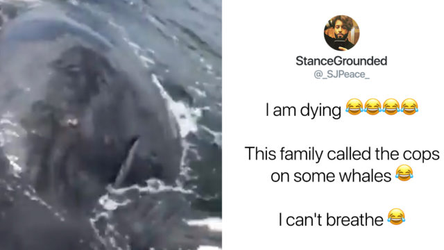Ridiculous family calls the cops on whales while sailing
