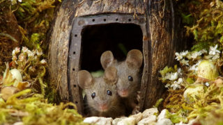 Man discovers a family of mice living in his backyard, builds them an epic village