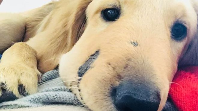 Dog who saved his owner from a rattlesnake named dog of the year