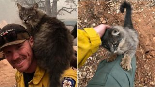 Legendary firefighter rescues cat from US wildfire, now she won't leave him alone
