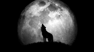 What happens if you put a werewolf on the moon?