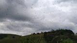 Video footage captured in Brazil shows it's f*cken raining spiders