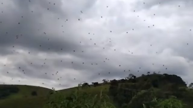 Video footage captured in Brazil shows it's f*cken raining spiders