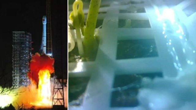 China has just sprouted a plant on the far side of the moon