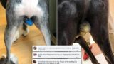 People are chucking glitter on their dog's balls
