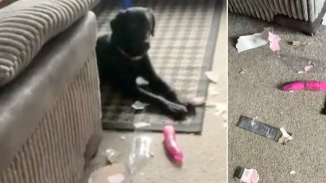 """Dog destroys neighbours """"toy"""" parcel, resulting in very awkward exchange"""