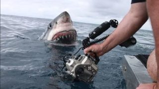 The terrifying moment a 5 metre Great White Shark lunges out of the water