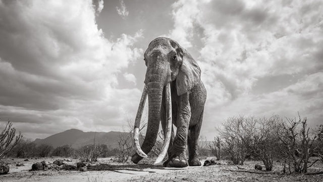 "The last photos of legendary ""Queen of the Elephants"""