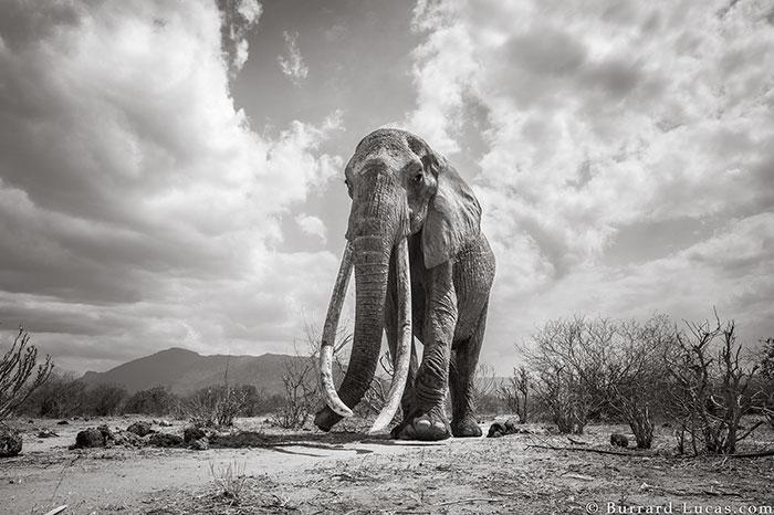 "The last photos of legendary ""Queen of the Elephants"""