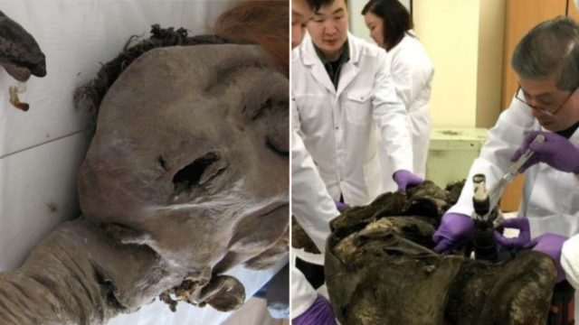 Woolly Mammoth-infused cells show f***en signs of biological activity after 28,000 years