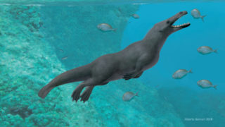 Ancient four-legged whale discovered in Peru