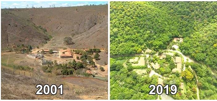 Legendary couple regenerate a completely destroyed forest in just 20 years