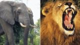 Rhino poacher sent to Destination F*@#ed by elephants and lions