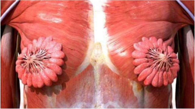A picture showing what a sheila's breast milk duct looks like has gone viral