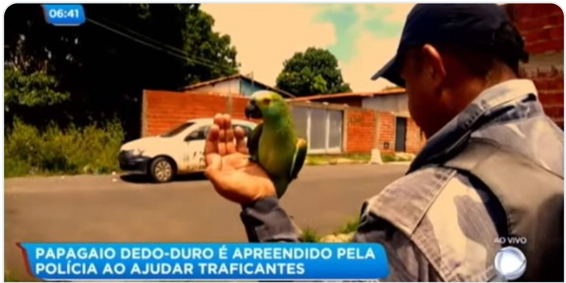 This badass parrot got arrested for warning drug dealers about the police