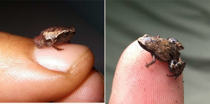 These tiny frogs have been discovered and their names are f**ken mint
