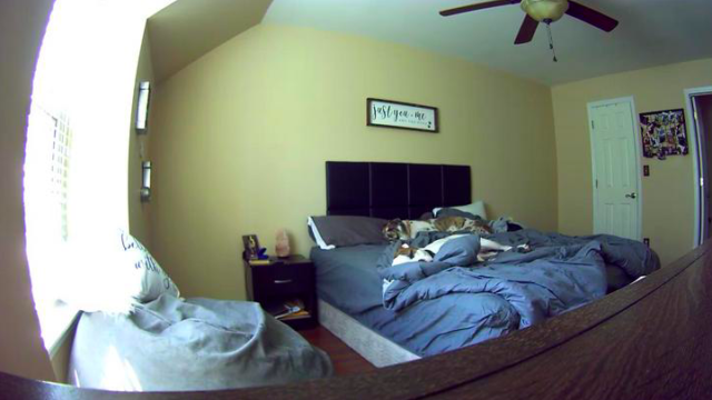Bloke gets busted w**king by girlfriend after she logged into their 'Petcam' from work