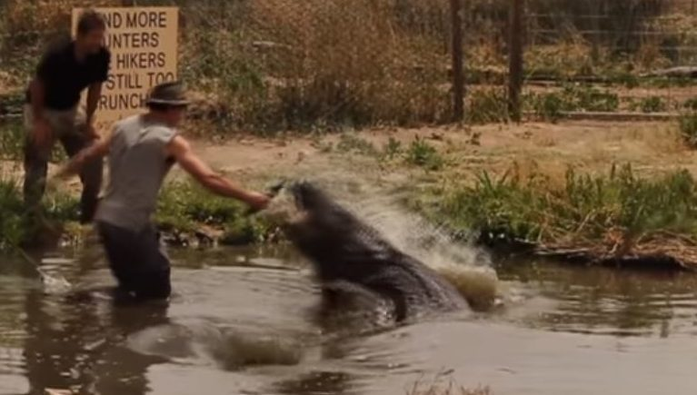 """""""Wild Charles"""" almost loses an appendage """"exercising"""" a giant Alligator"""