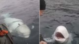 This huge f**ken whale is suspected of being a Russian weapon