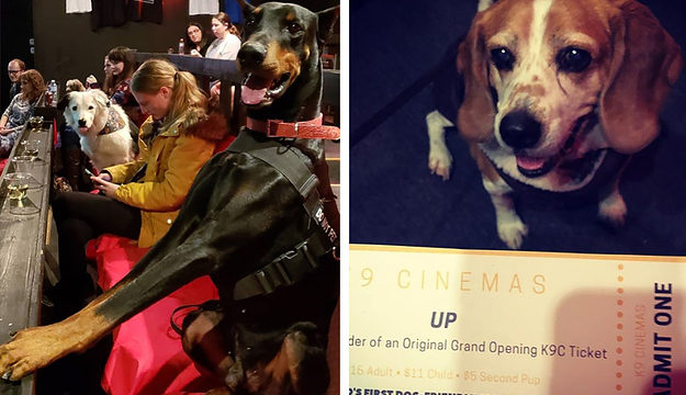 This cinema in the U.S lets you take your dog and drink unlimited booze
