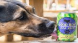 You can now share a brewski with your good boi thanks to these non-alcoholic beers