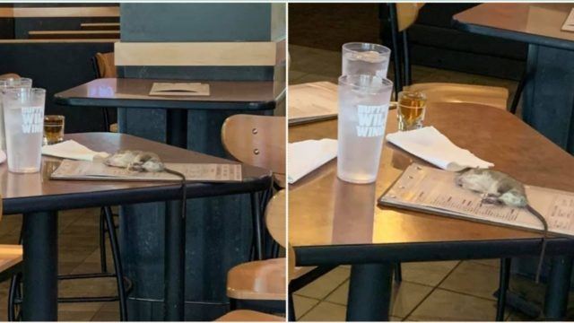 Live rat falls from ceiling onto restaurant table