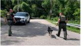 Crim's massive fart alerts police to his hiding spot leading to arrest