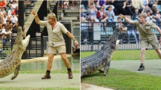 Steve and Robert Irwin fed the same Croc in the same place 15 years apart